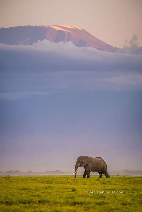 Photograph of a large bull elephant and view of Mount Kilimanjaro in Amboseli National Park, Kenya.