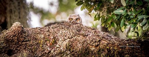 Peek A Hoot