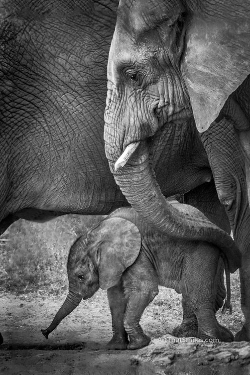 "A photograph of a baby elephant and mother, Kenya. Art from the ""Land Animals"" photo collection."