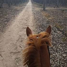 Tolly out for a hack at the youyangs