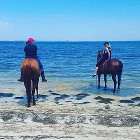 Tolly and Baby sitter Bundy out for her first ride at the beach