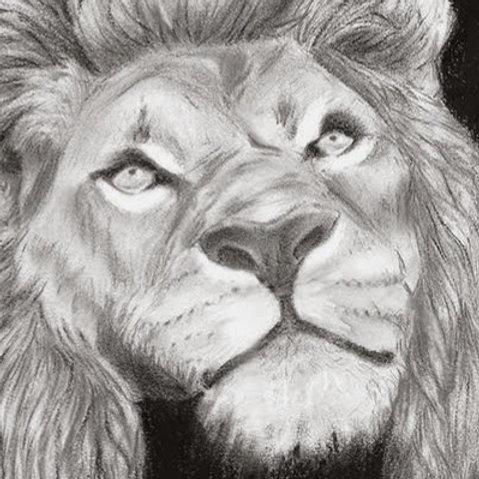 """""""Lion"""" - Charcoal Animal Portrait Print"""