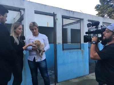 Vistoria no Centro Zoonoses de Suzano identifica irregularidades
