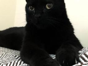 Gatos pretos: De malignos só os donos