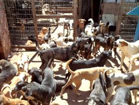 Acumuladores de animais