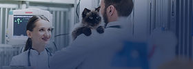 veterinário.jpg