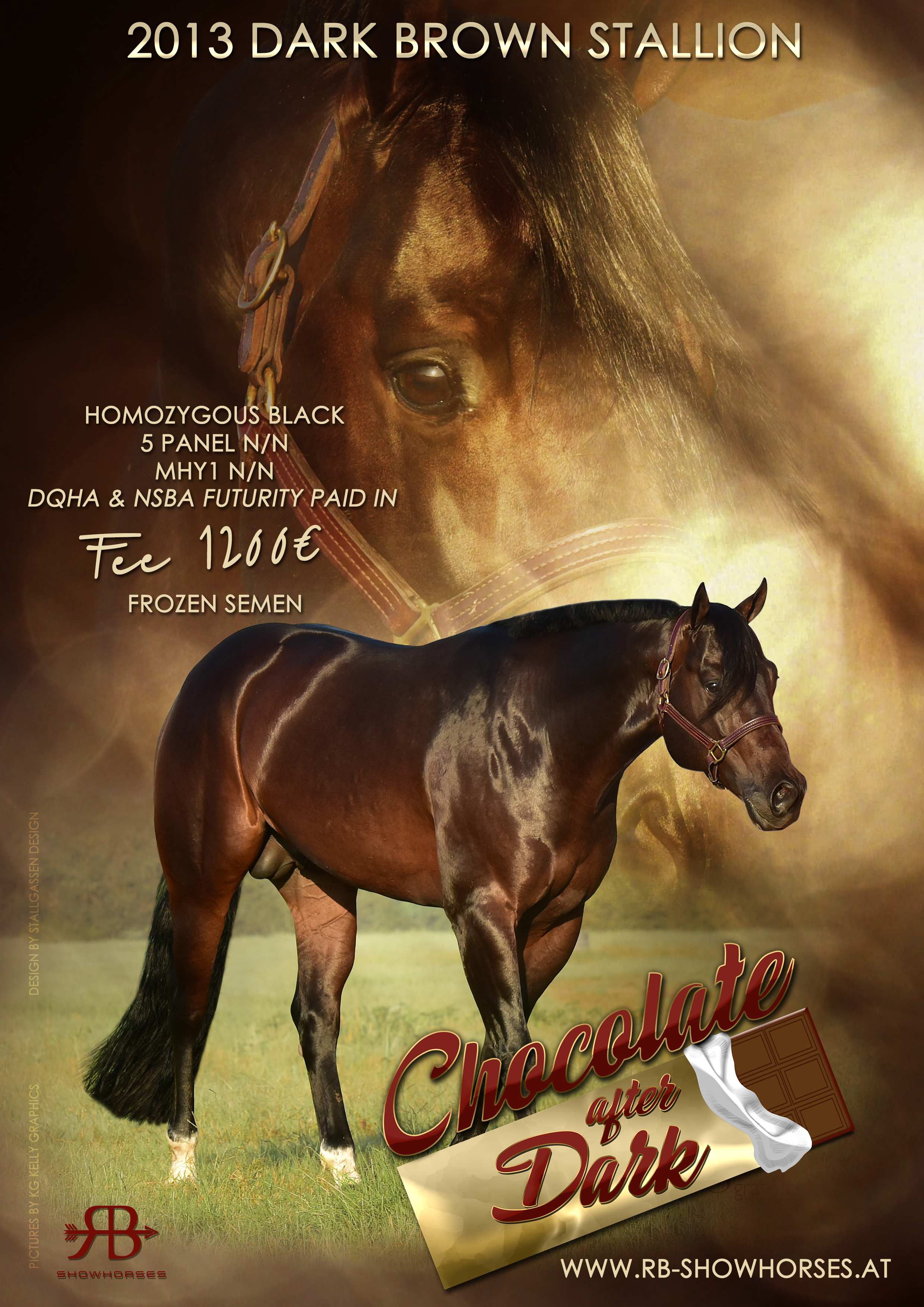 Stallion AD Chocolate after Dark 2