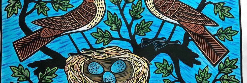 Song Thrushes & Nest