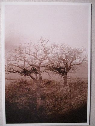 BURIAL TREE