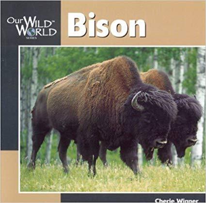 Bison: Our Wild World