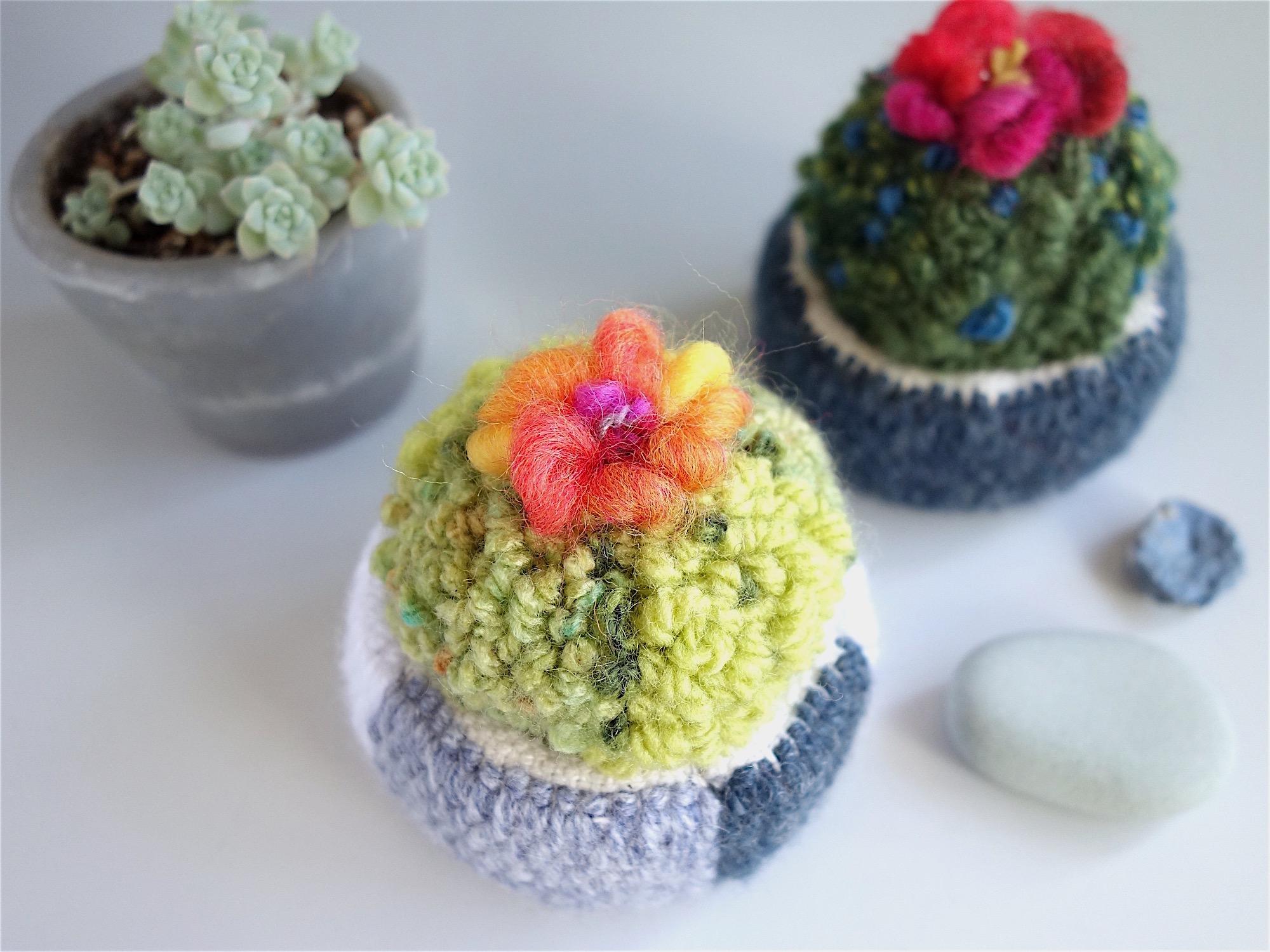 サボテンの鉢植え