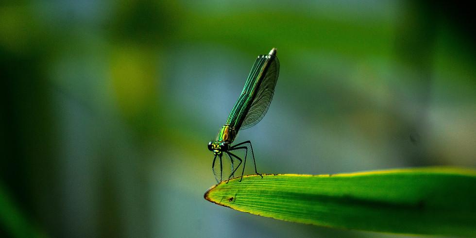 """Sortie nature """"les libellules"""""""