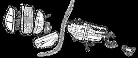 Grotschildering-handleiding-lijntekening