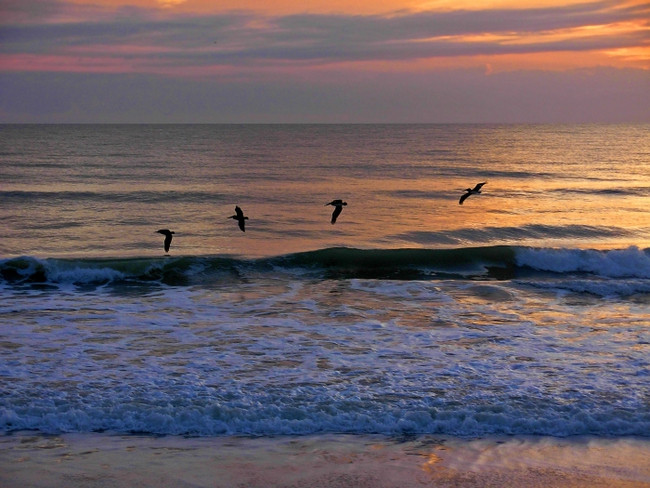 'Soaring at Dawn', Kathleen Finnerty