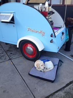 Loyal helper - SEDA Puppy ASHA