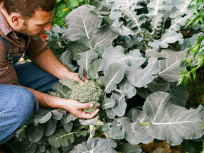 Small scale, organic farming the best way to feed the world's population