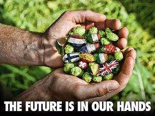 Heineken Western Europe Division