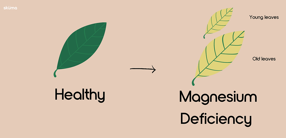 Magnesium deficiency for plants