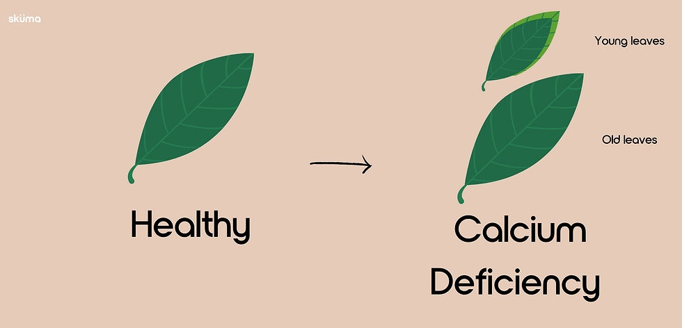 Calcium deficiency for plants