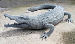 crocodilo em outra perpectiva
