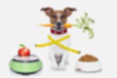 hond op weegschaal 2.jpg
