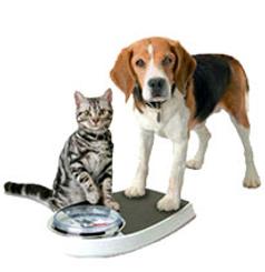 hond en kat op weegschaal.bmp