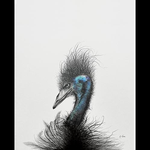 Emu, Color