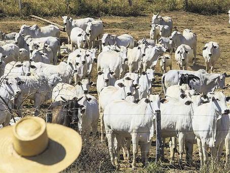 Cupo a exportación de carne frena inversión e impulsa el contrabando