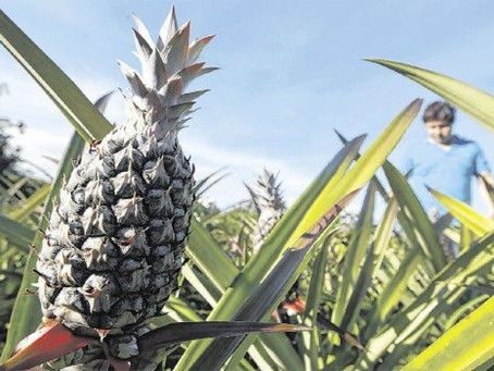 Cae un 17% la exportación de productos no tradicionales a los mercados vecinos