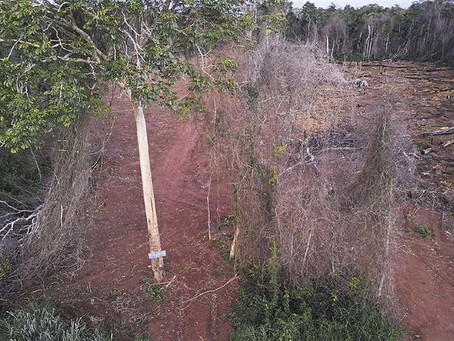 Informe técnico establece que reserva de Bajo Paraguá es tierra fiscal no disponible