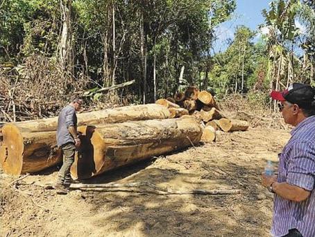 Mercados externos abren oportunidad de negocios para la madera
