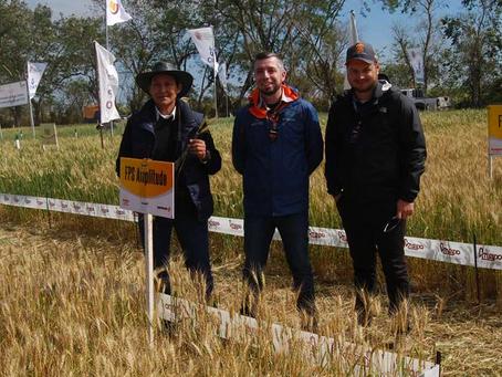 Día Nacional del Trigo será virtual con presentación de parcelas demostrativas y variedad de cereal