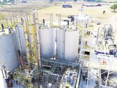 Con derivados de etanol de sorgo se prevé engordar 40.000 bovinos