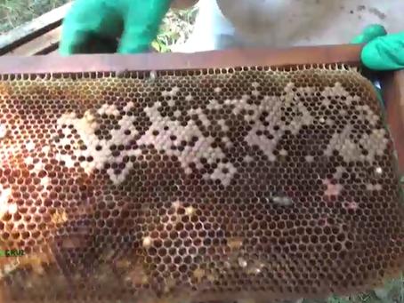 mueren las abejas en Río Grande: más de 300 colmenas quedaron en nada, golpeando la economía