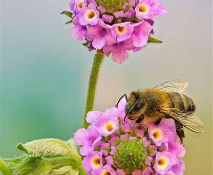 Ministros de UE acuerdan mejorar protección de abejas frente a pesticidas