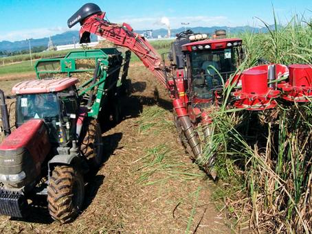 Ante la falta de caña, el ingenio de San Buenaventura alienta su cultivo en Beni