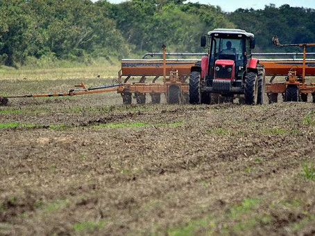 Productores creen que lluvias en zonas productivas dinamizarán la siembra de soya, maíz y sorgo