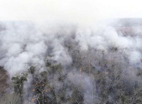 Cicatriz de incendios de 2019 coincide con los asentamientos aprobados por el INRA