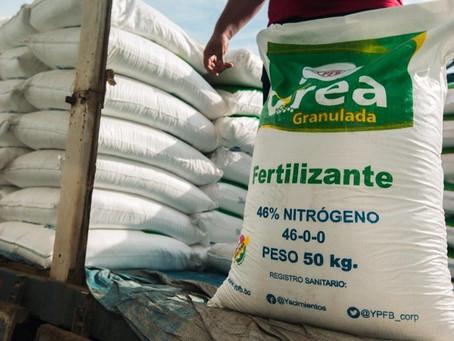 90% de agricultores de maíz optan por la urea boliviana