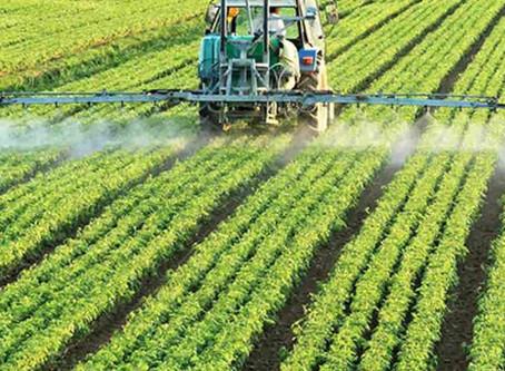 Productores de semillas advierten que solo un 45% de los campos usa variedades certificadas