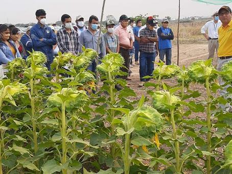 Día de campo para cultivos de invierno en San Julián, con gran asistencia