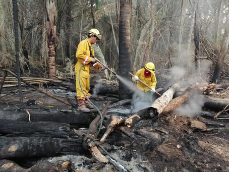 Incendios forestales arrasan con dos millones de hectáreas