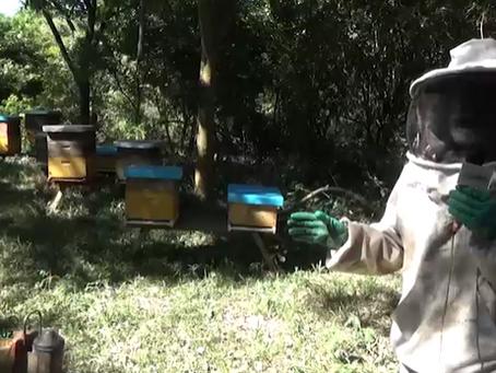 Uso de transgénicos, la hipótesis del Ministerio de Medio Ambiente sobre la mortandad de abejas
