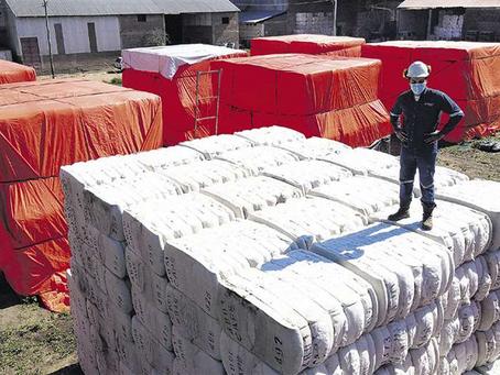 Gobierno prevé compra de algodón a Brasil pese a haber 2.500 t en stock