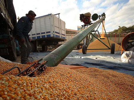 Granos de contrabando ingresan al país como producción nacional