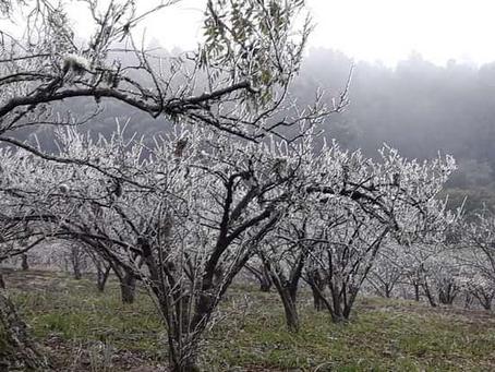 Heladas: Productores de los Valles cruceños piden reprogramación de créditos y seguro agrícola