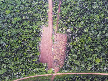 Ninguna autoridad estatal responde por el ingreso ilegal en Bajo Paraguá