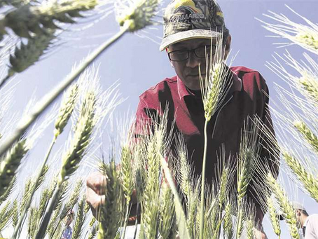 Reactivación: créditos superan los Bs 141 millones y se extienden a agropecuarios