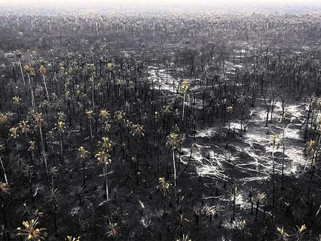 La superficie quemada en dos departamentos del país se acerca al millón de hectáreas