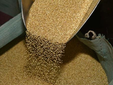 La empresa estatal EBA exportará 1.000 toneladas de quinua al mercado chino